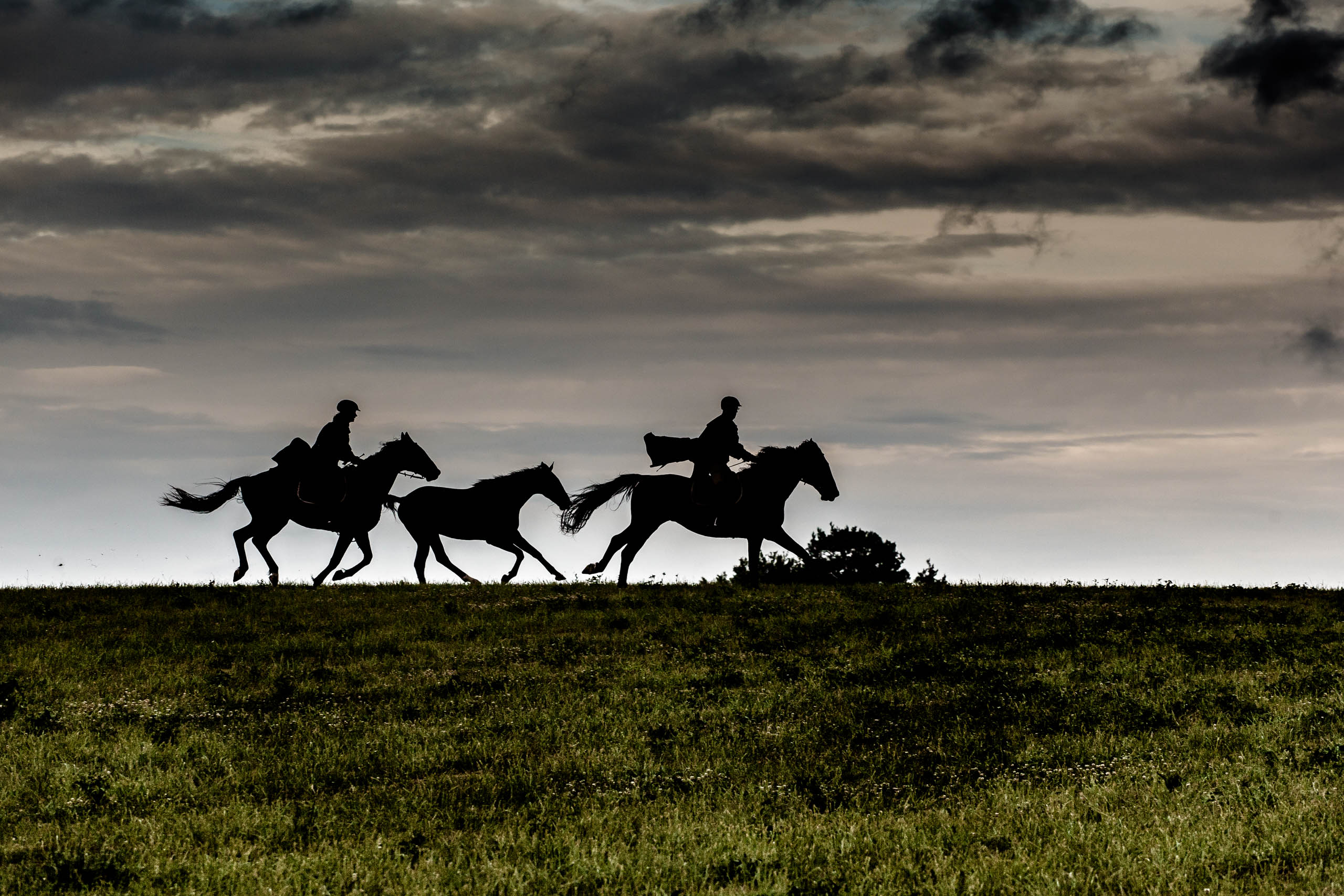konie, horses, Warmia and Mazury, horse riding